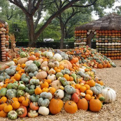 Los Mejores Pumpkin Patches de DFW
