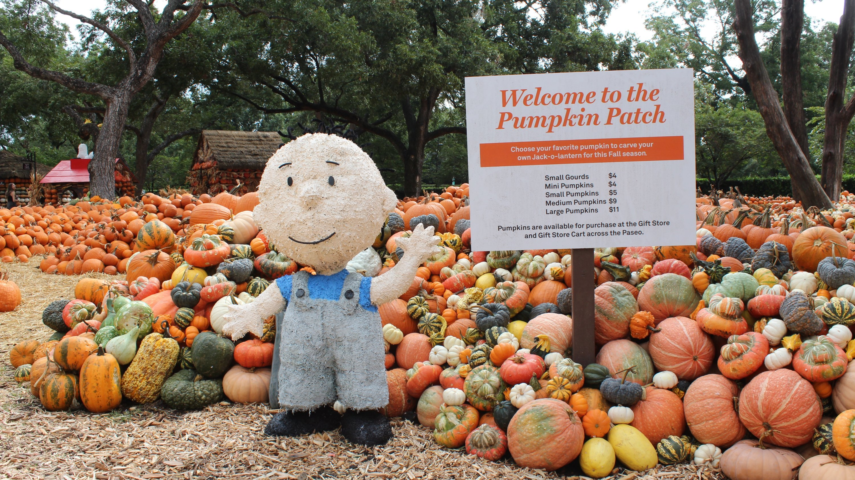 del amo pumpkin patch 2020