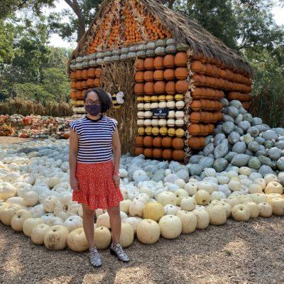 Llega el Otoño al Dallas Arboretum con su Bella Exhibición de 90.000 Calabazas